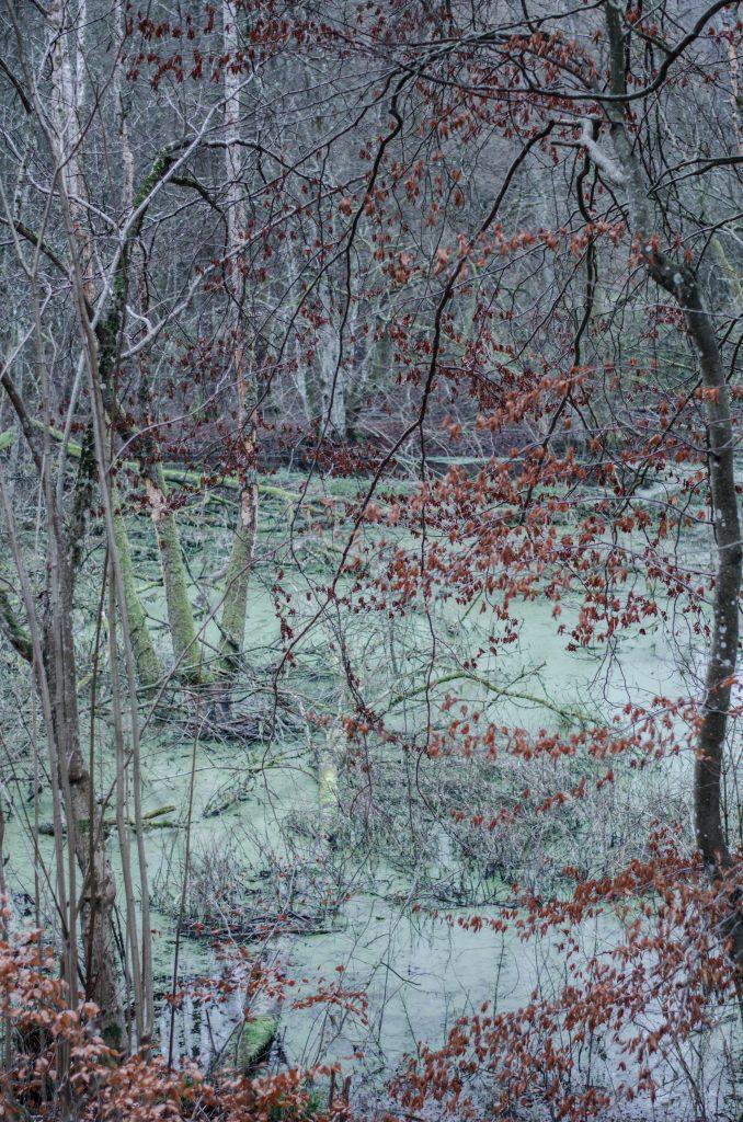 Poczuj zapach lasu. Aromaterapia leśna.