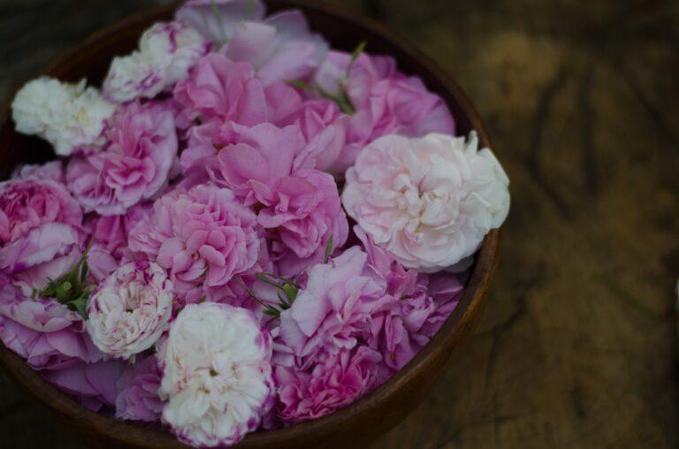 kwiaty róż do enfleurage
