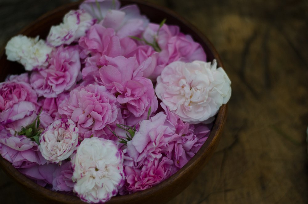 Olejek różany Herbiness