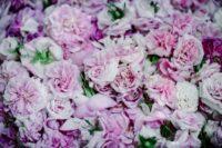 Róża damasceńska OLEJEK różany 100%
