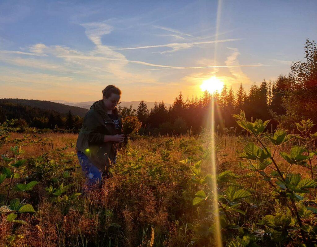 zielarka zbierająca zioła