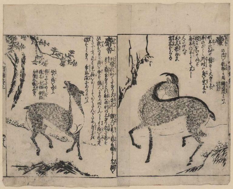 para piżmowców grafika japońska